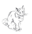 The Russian Blue Cat on a white background vector image