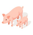 Isometric 3d of small and large pig vector image