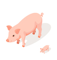 Isometric 3d of pink pig vector image