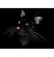 Black cat in the dark2 vector image