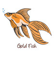 goldfish color vector image