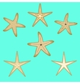 Starfish a set of six options vector image