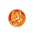 Tiger Prowling Head Circle Retro vector image
