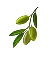 olives on branch painted vector image