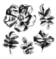 Hand drawn rose-hip flowers and leaves vector image