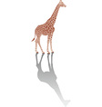 Giraffe with shadow vector image vector image
