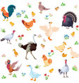 Farm birds and their ducklings in cartoon style as vector image
