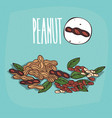 set of isolated plant peanut nuts herb vector image