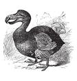 Dodo vintage engraving vector image
