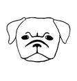 Pug puppy vector image