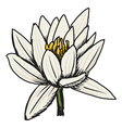 white lotus vector image vector image