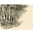 Forest edge drawing generic vegetation sketch vector image