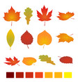 isolated autumn leaves flat vector image