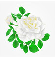 white rose with buds and leaves vintage hand draw vector image