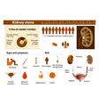 Kidney stones vector image vector image
