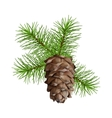 Christmas branch hanging pine cone vector image