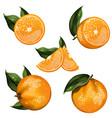 orange fruit isolated set vector image