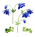 Collection of watercolor aquilegia flowers vector image