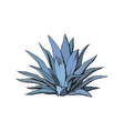Hand drawn blue agave main tequila ingredient vector image