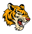 tiger color vector image vector image