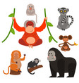 different types of monkeys rare animal set vector image