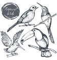 collection of sketch exotic tropical birds vector image