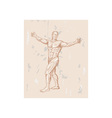 male human anatomy vector image