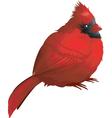 Robin character vector image
