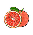 whole and half unpeeled ripe pink grapefruit vector image