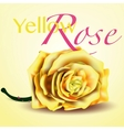 Card with Yellow Rose on Background vector image vector image