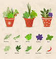 rustic collection of different herbs planted in vector image vector image