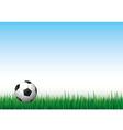 ball grass vector image