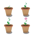 growth of flower vector image