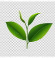 tea leaves in transparent background vector image