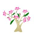 Desert Rose or Bignonia on White Background vector image