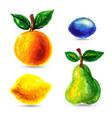 handmade watercolor grunge fruits for retro design vector image