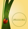 Green grass stem dew drops cute ladybug vector image