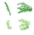 set of thyme and tarragonin realistic style vector image