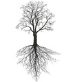 Walnut tree with roots vector image