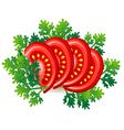 ripe fresh tomato vector image vector image