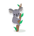 koala cartoon flat vector image