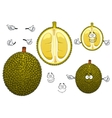 Thai smelly green durian fruit vector image