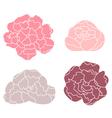 Peony pastel flower set isolated on white vector image
