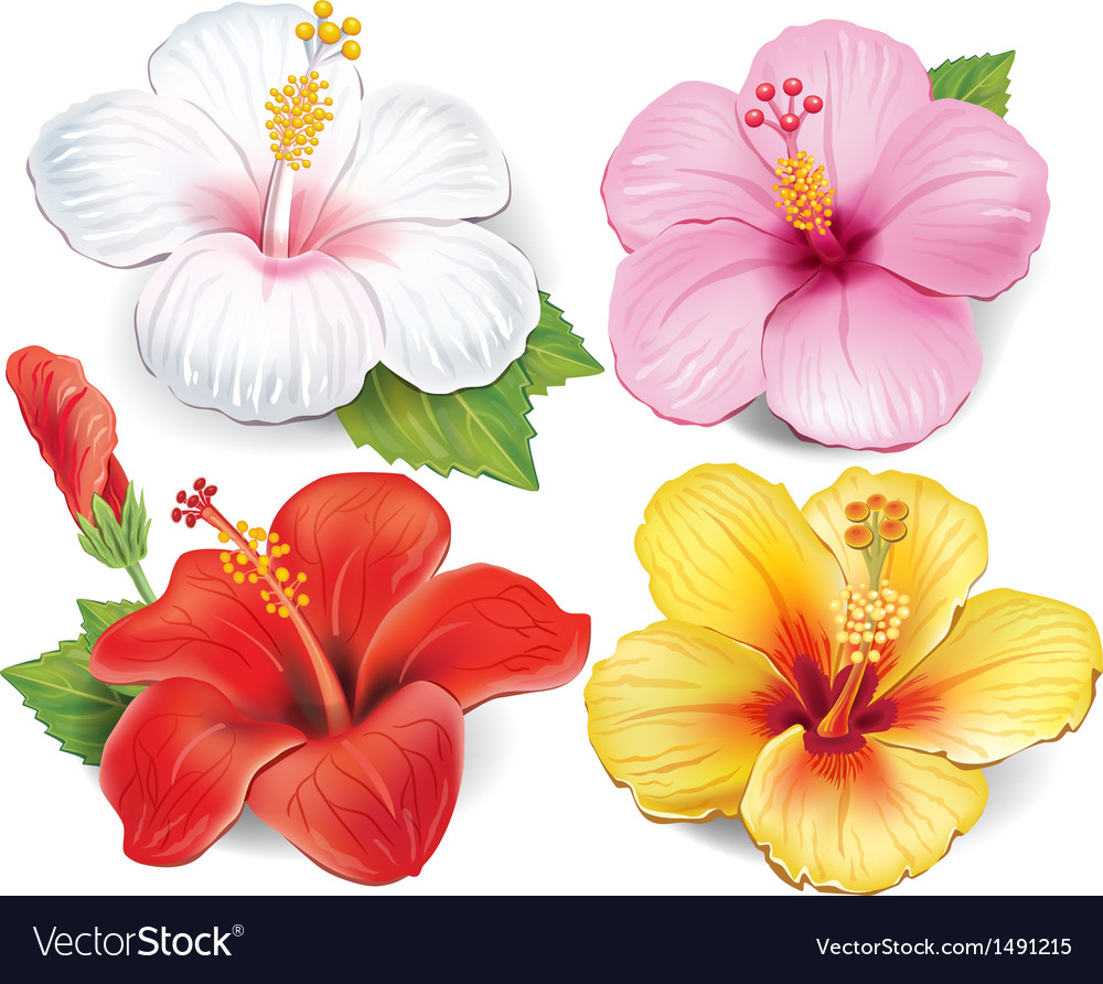Set of hibiscus vector