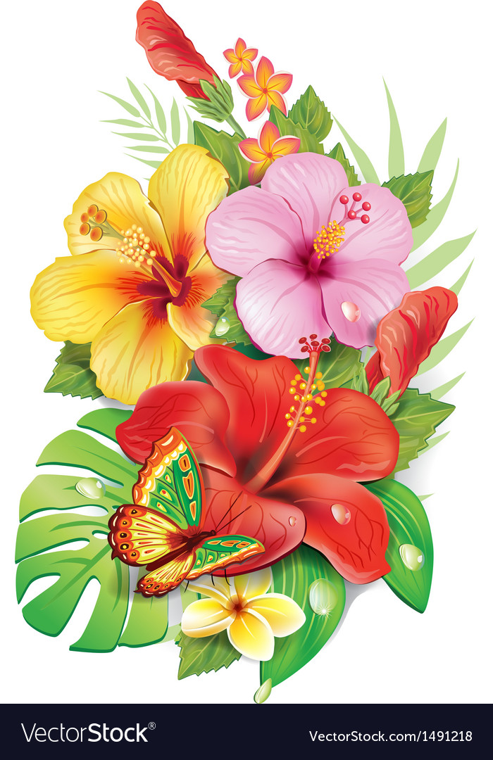 Bouquet of tropical flowers vector
