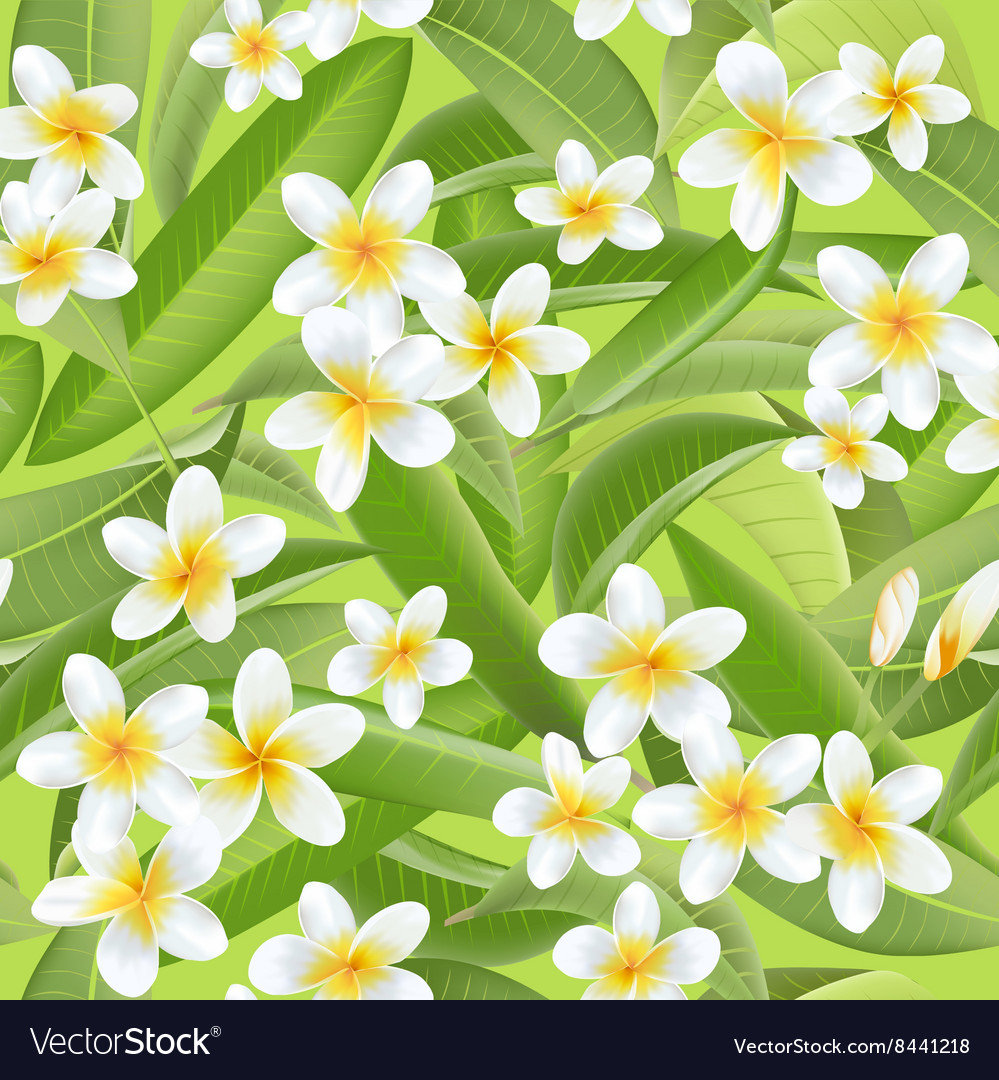Tropical leaves background tropical flowers vector