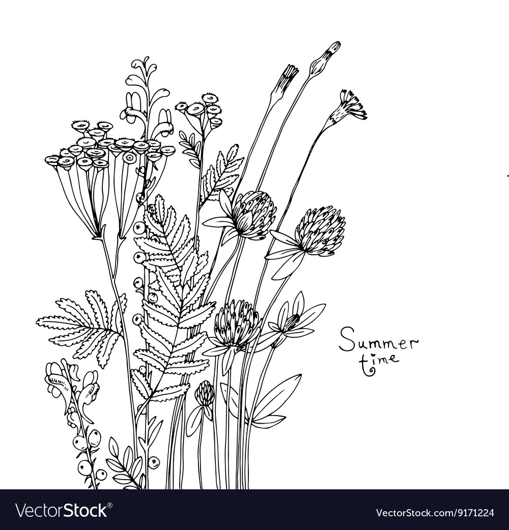 Sketch of the wildflowers vector