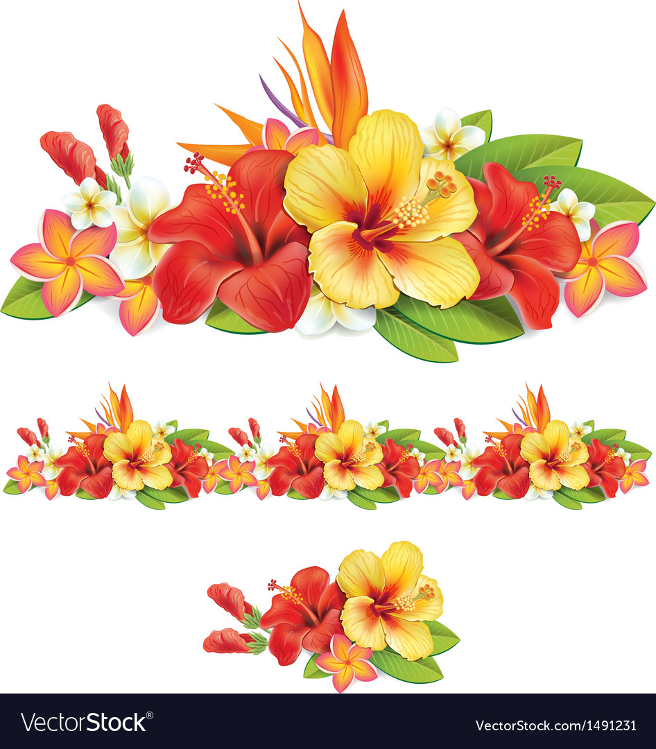 Garland of tropical flowers vector