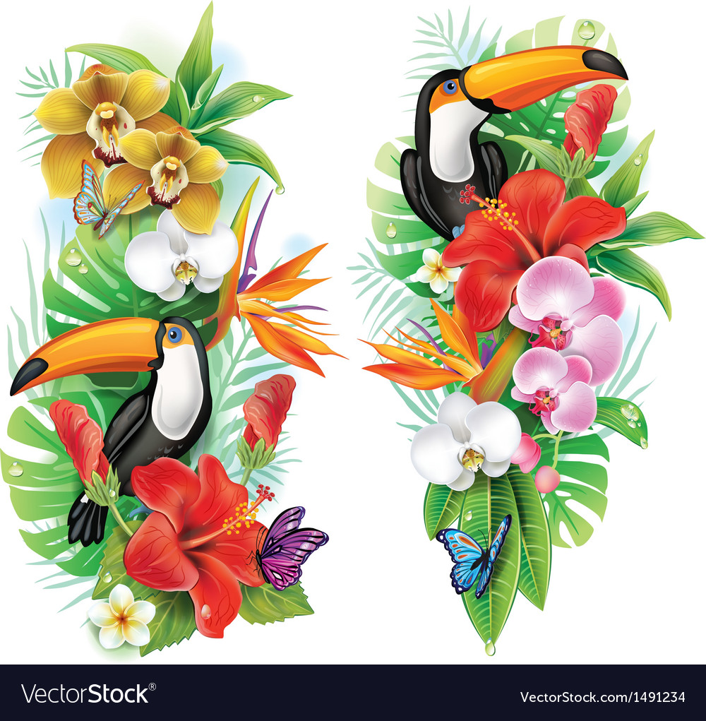 Tropical flowers toucan and a butterflies vector