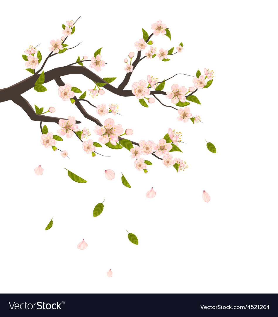 Cherry blossom branch of tree with flying petals vector